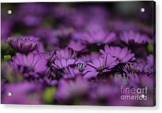 Purple Mood Acrylic Print