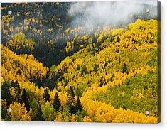 Quaking Aspen And Ponderosa Pine Trees Acrylic Print