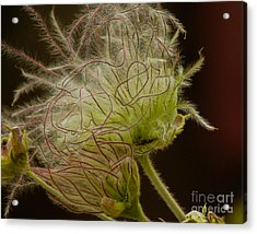 Quirky Red Squiggly Flower 3 Acrylic Print
