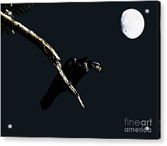 Quoth The Raven Nevermore Acrylic Print by Wingsdomain Art and Photography
