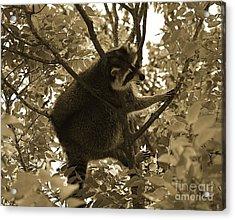 Raccoon  Acrylic Print by Janice Spivey