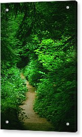 Rain Forest Walk Acrylic Print