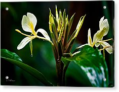 Rain Refreshed Acrylic Print by Christopher Holmes