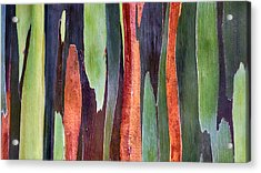 Acrylic Print featuring the photograph Rainbow Eucalyptus by Susan Rissi Tregoning