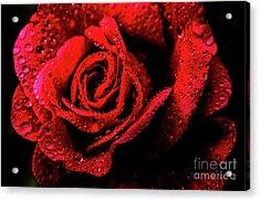Raindrops On Rose Acrylic Print by Thomas R Fletcher