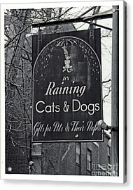 Acrylic Print featuring the photograph Raining Cats And Dogs by Juls Adams