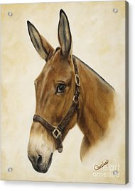 Acrylic Print featuring the painting Ready Mule by Cathy Cleveland