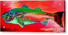Red Drum Acrylic Print by Everett White