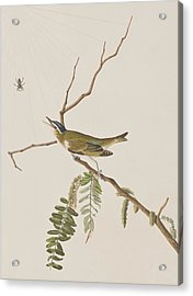 Red Eyed Vireo Acrylic Print by John James Audubon
