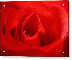 Red Rose Acrylic Print by Svetlana Sewell