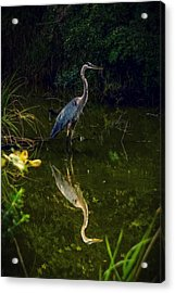 Acrylic Print featuring the photograph Reflect. by Kendall McKernon