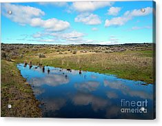 Acrylic Print featuring the photograph Reflections Of Spring by Mike Dawson