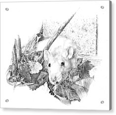 Reggie The Rat Acrylic Print by Judith Angell Meyer