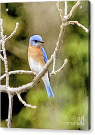 Acrylic Print featuring the photograph Rhapsody In Blue by Betty LaRue