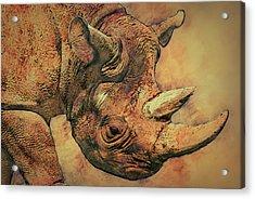 Rhino 5 Acrylic Print