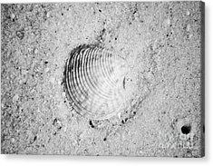 Ribbed Sea Shell In Fine Wet Sand Macro Black And White Acrylic Print