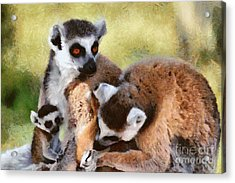 Ring Tailed Lemurs Family Acrylic Print by George Atsametakis