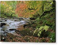 River Barle In Somerset Acrylic Print