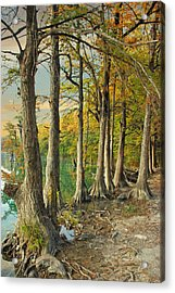River Road Cypress II Acrylic Print