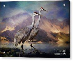 Rocky Mountain Sandhill Cranes Acrylic Print