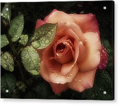 Romancing The Rose Acrylic Print