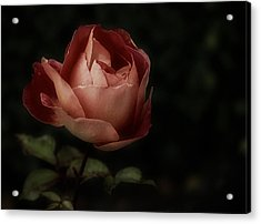 Romantic November Rose Acrylic Print
