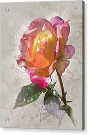 Rosa, 'glowing Peace' Acrylic Print