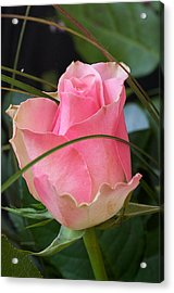 Rose Acrylic Print by Theo Tan