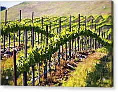 Rows Of Vines Acrylic Print by Patricia Stalter