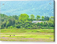 Rural Scenery In Spring Acrylic Print