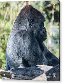 San Diego Zoo, California Acrylic Print by Richard Smukler