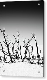 Sand Dune With Dead Trees Acrylic Print by Chevy Fleet