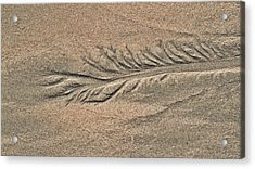 Sand Patterns On The Beach 2 Acrylic Print by Steven Ralser