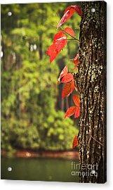 Scenic Elder Lake Acrylic Print