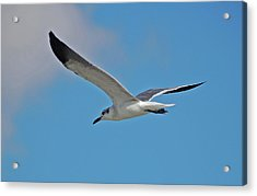 Acrylic Print featuring the photograph 1- Seagull by Joseph Keane