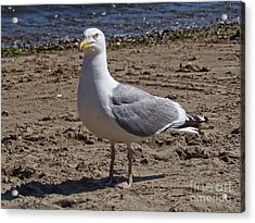 Seagull On Beach Acrylic Print