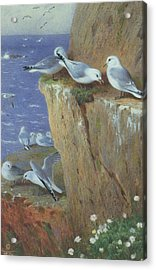 Seagulls Acrylic Print by Archibald Thorburn