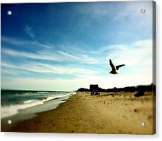 Seagulls At The Beach. Acrylic Print by Carlos Avila