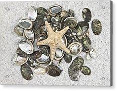Seashells Acrylic Print by Joana Kruse