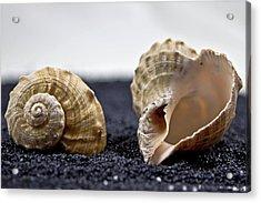 Seashells On Black Sand Acrylic Print by Joana Kruse