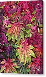 Seasons End Acrylic Print by Tim Gainey