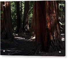 Sequoias On Half Dome Trail Acrylic Print by Bransen Devey