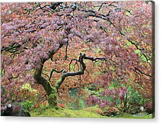 Acrylic Print featuring the photograph Shaded By Beauty by Brandy Little