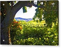 Shady Vineyard Acrylic Print by Patricia Stalter
