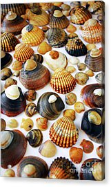 Shell Background Acrylic Print by Carlos Caetano