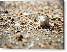 Shells Acrylic Print by Isaac Nachshon