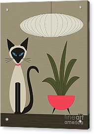 Siamese Cat On Tabletop Acrylic Print