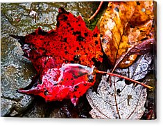 Acrylic Print featuring the photograph Signs Of Autumn by Everett Houser