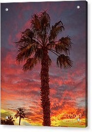 Silhouetted Palm Tree Acrylic Print by Robert Bales