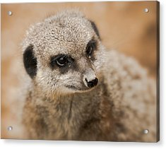 Acrylic Print featuring the photograph Simples by Chris Boulton